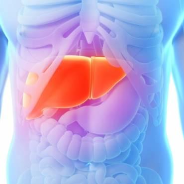 Meditation  liver