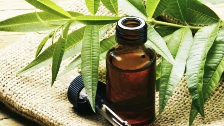 Das Ätherische Teebaumöl