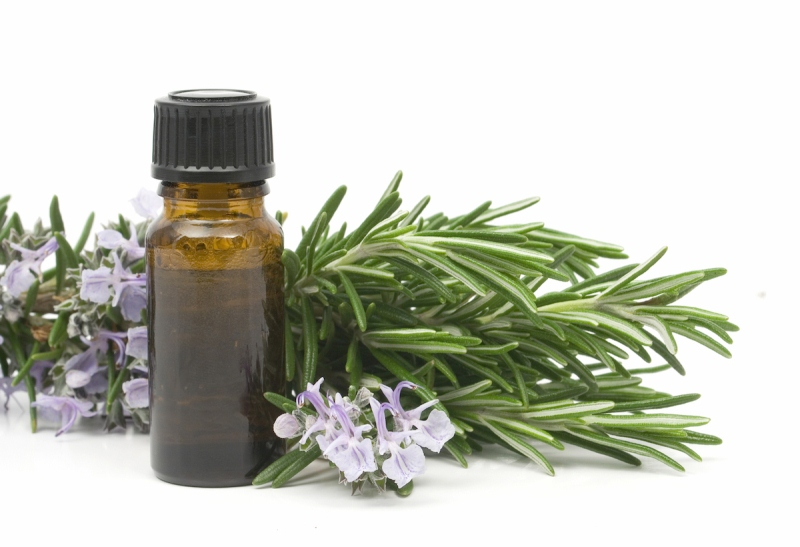 Ätherische Öl von Eukalyptus